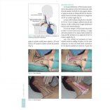 ergon_libro_acceso_sistema_nervioso_m2